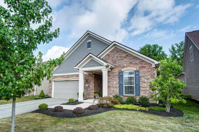 5542 Eventing Way, Hilliard, OH 43026 (MLS #219025741) :: RE/MAX Metro Plus