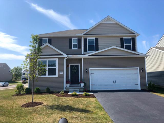 8757 Bobwhite Drive, Blacklick, OH 43004 (MLS #219029157) :: RE/MAX ONE
