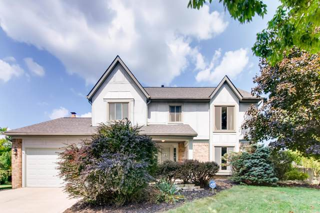 10142 Chantry Place, Pickerington, OH 43147 (MLS #219034762) :: RE/MAX ONE