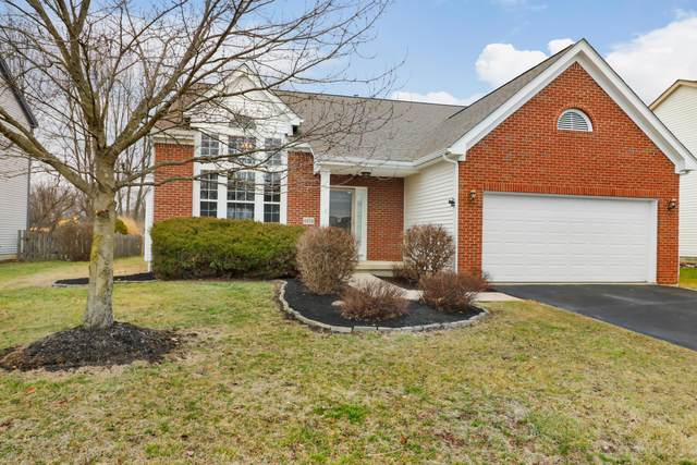 6654 Seckel Drive, Westerville, OH 43082 (MLS #220004039) :: ERA Real Solutions Realty