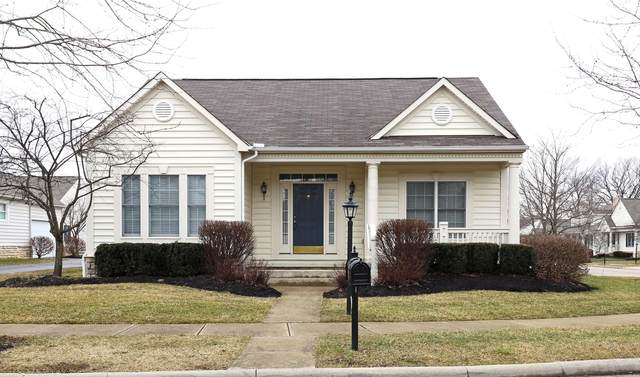 7061 Camden Drive, New Albany, OH 43054 (MLS #220004937) :: RE/MAX Metro Plus