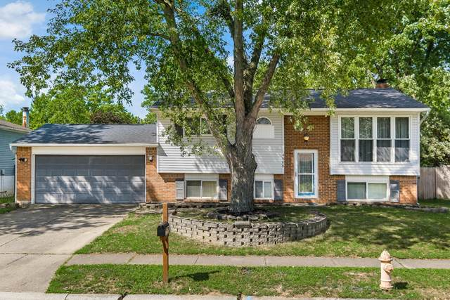 4686 Sperry Avenue, Columbus, OH 43230 (MLS #220028155) :: Sam Miller Team