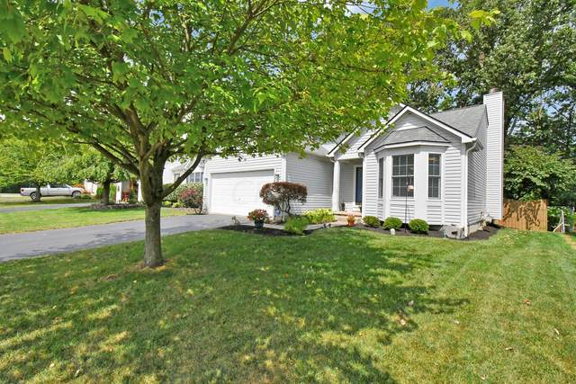 338 Amber Wood Way, Lewis Center, OH 43035 (MLS #220029863) :: Core Ohio Realty Advisors