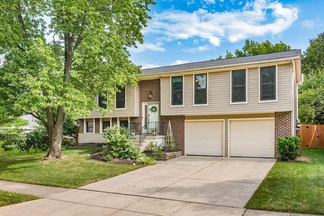 3431 Katie Drive, Columbus, OH 43221 (MLS #220031182) :: The Willcut Group