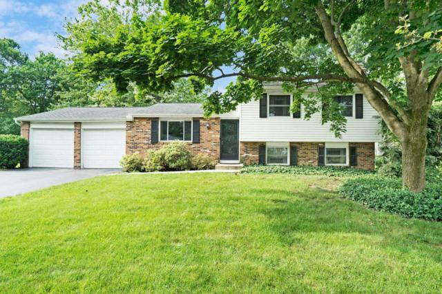 1181 Hepplewhite Court, Westerville, OH 43081 (MLS #218020230) :: RE/MAX ONE