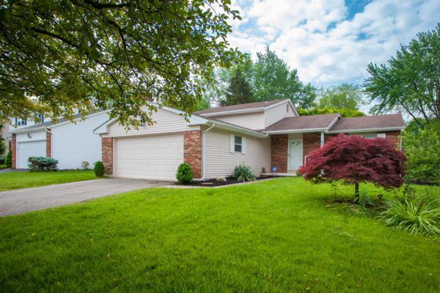 6595 Fusilier Avenue, Reynoldsburg, OH 43068 (MLS #219018670) :: Brenner Property Group   Keller Williams Capital Partners