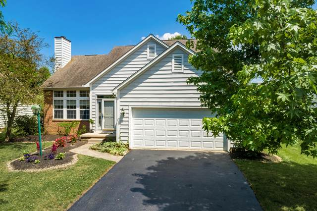 6763 Callaway Court, Westerville, OH 43082 (MLS #220021159) :: Core Ohio Realty Advisors