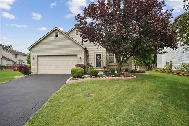 1239 Aniko Avenue, Lewis Center, OH 43035 (MLS #221030940) :: ERA Real Solutions Realty
