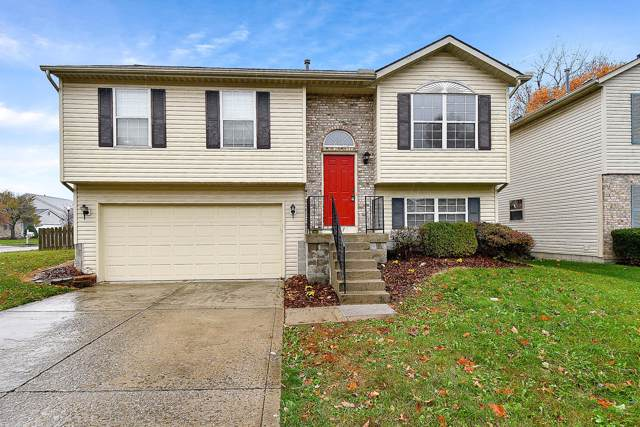 7937 Dolmen Drive, Blacklick, OH 43004 (MLS #219041466) :: Keller Williams Excel