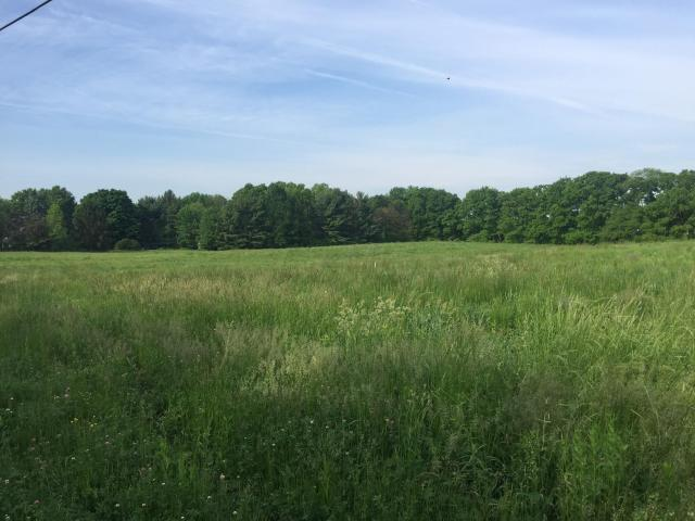6525 Africa Road, Galena, OH 43021 (MLS #218013171) :: Exp Realty
