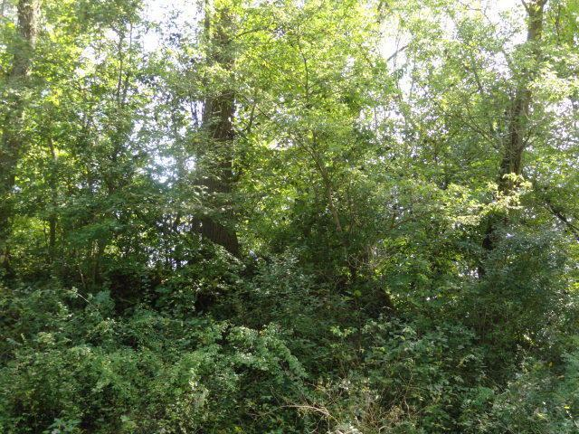 0 Quarry Court Lot #121, Chesterville, OH 43317 (MLS #219006661) :: ERA Real Solutions Realty