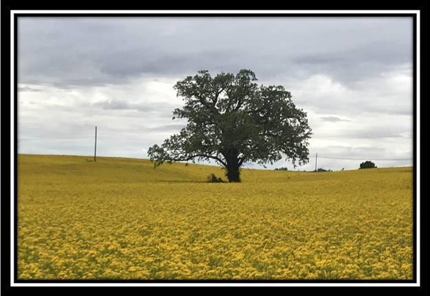 10228 Rankin Road - Photo 1