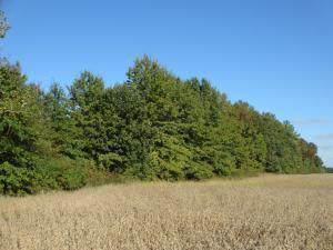 0 Clark-Shaw Road, Powell, OH 43065 (MLS #219036600) :: Core Ohio Realty Advisors