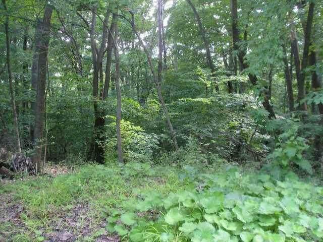 1239 Zuni Lane, Sugar Grove, OH 43155 (MLS #220032849) :: Core Ohio Realty Advisors