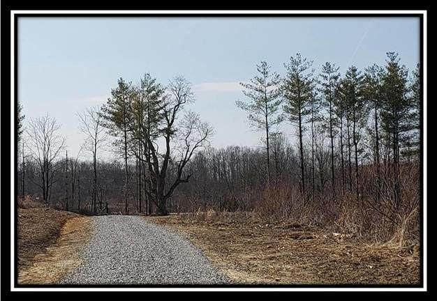 0 Edmundson Rd, Vinton, OH 45686 (MLS #221006994) :: Core Ohio Realty Advisors