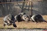 31052 Oak Mesa Road - Photo 15