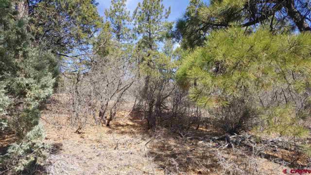 2988 Crooked Road, Pagosa Springs, CO 81147 (MLS #743993) :: CapRock Real Estate, LLC