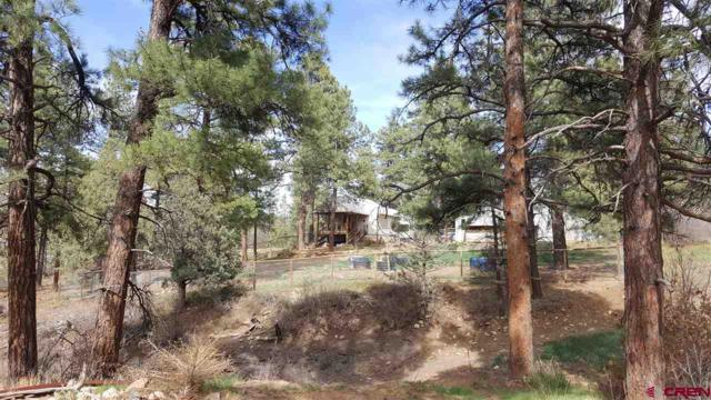 235 Nutria Circle, Pagosa Springs, CO 81147 (MLS #744476) :: CapRock Real Estate, LLC