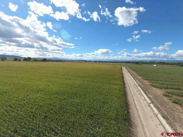 18668 B50 Road, Delta, CO 81416 (MLS #750825) :: CapRock Real Estate, LLC