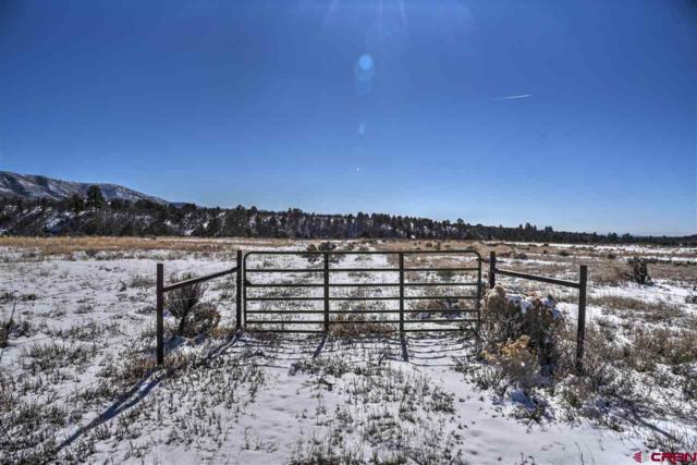 TBD Cr 141, Hesperus, CO 81326 (MLS #752258) :: Durango Mountain Realty