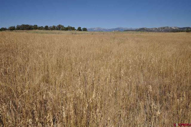 303 Mama Llama Lane, Durango, CO 81303 (MLS #763284) :: Durango Mountain Realty