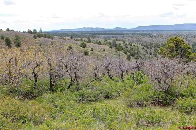 TBD Roberts Ridge Dr, Hesperus, CO 81326 (MLS #780007) :: Durango Mountain Realty