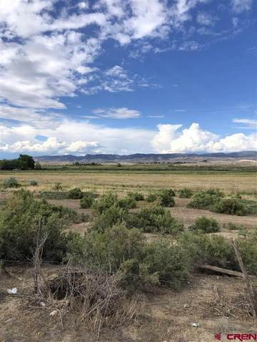 303 Kinikin Road, Montrose, CO 81403 (MLS #783827) :: Dawn Howe Group   Keller Williams Colorado West Realty
