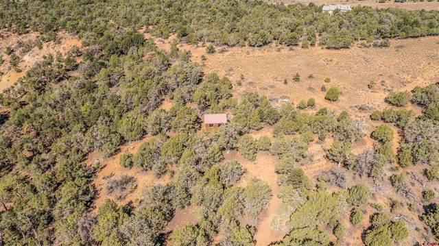 191 High Llama Lane, Durango, CO 81301 (MLS #787178) :: Durango Mountain Realty