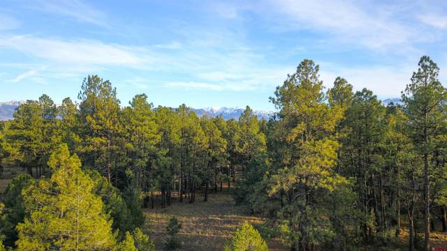 (Lot 339) Tbd Bear Cub Drive, Ridgway, CO 81432 (MLS #788067) :: The Howe Group | Keller Williams Colorado West Realty