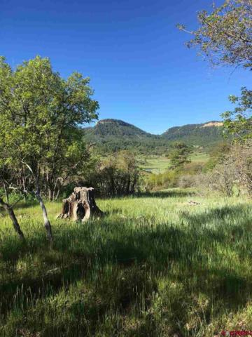 1175 Henry's Lake Drive, Pagosa Springs, CO 81128 (MLS #759478) :: The Dawn Howe Group   Keller Williams Colorado West Realty