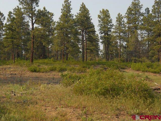 Lot 10 Hawks Meadow Drive, Bayfield, CO 81122 (MLS #714264) :: CapRock Real Estate, LLC