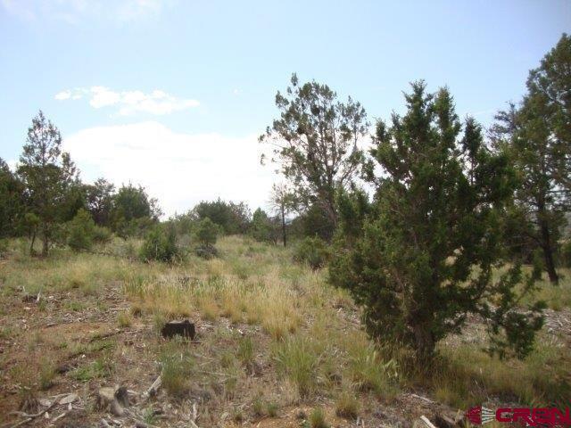 19307 Road 24.9 (G) Lot #6, Dolores, CO 81323 (MLS #731490) :: Durango Home Sales
