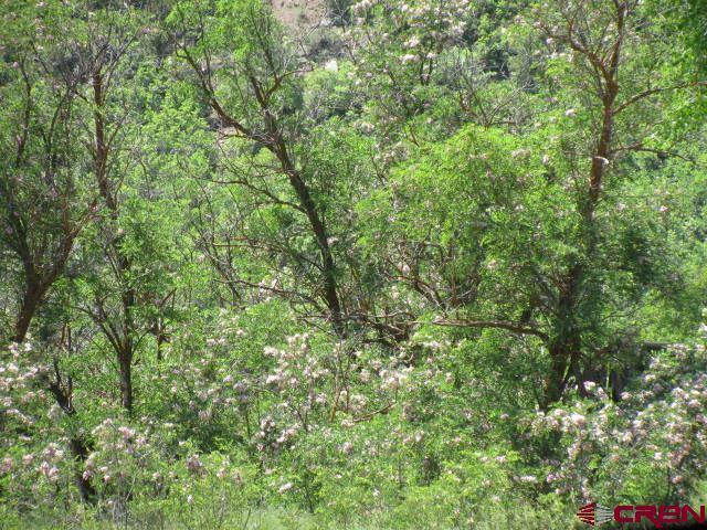 315 Doc Adams, Pagosa Springs, CO 81147 (MLS #745269) :: CapRock Real Estate, LLC