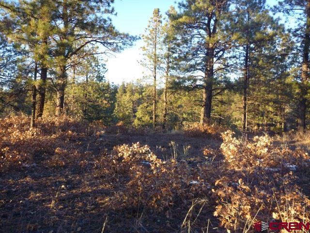121 & 87 Engineer Point, Pagosa Springs, CO 81147 (MLS #752299) :: Durango Home Sales