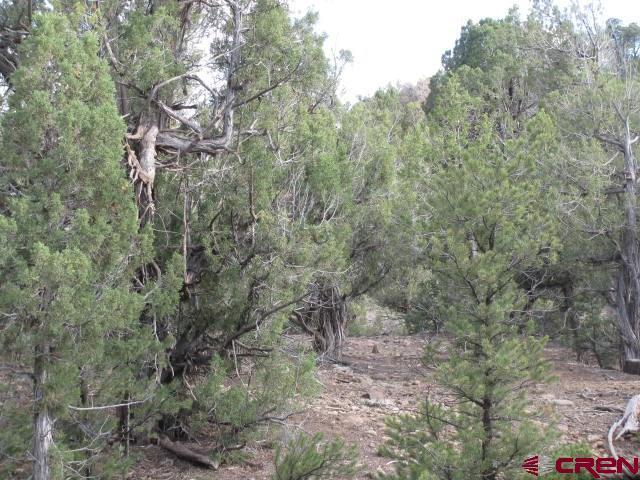 217 Summit Trail, Arboles, CO 81121 (MLS #757662) :: The Dawn Howe Group | Keller Williams Colorado West Realty