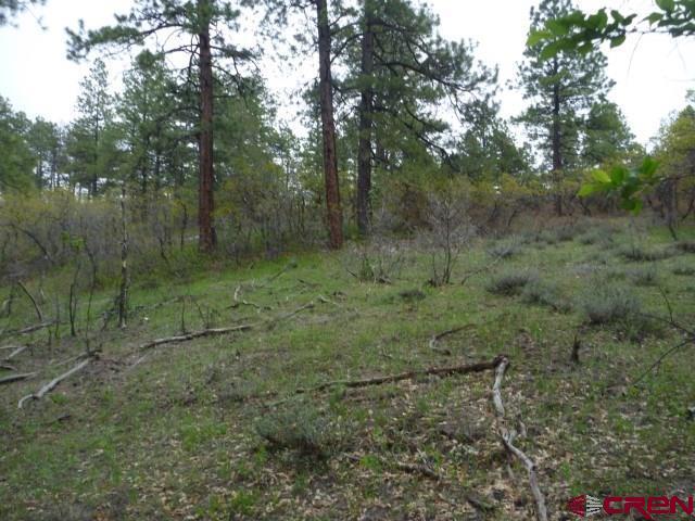 513 Gun Barrel Road, Pagosa Springs, CO 81147 (MLS #758039) :: The Dawn Howe Group   Keller Williams Colorado West Realty