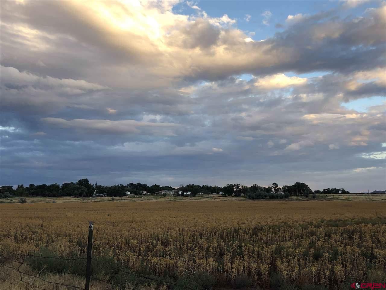 TBD County Road 104 Ralph/Peine - Photo 1