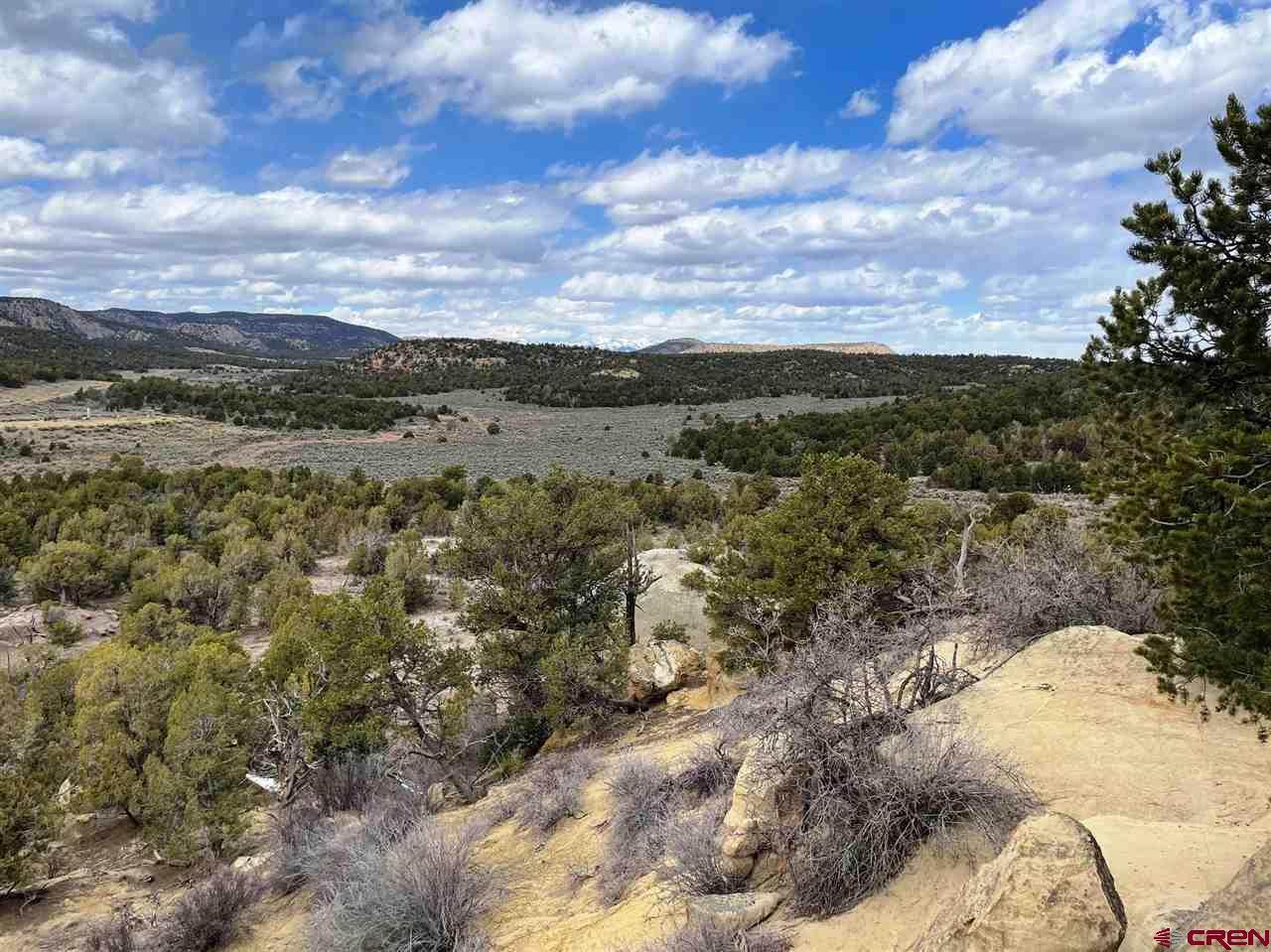 TBD Cox Canyon Road - Photo 1