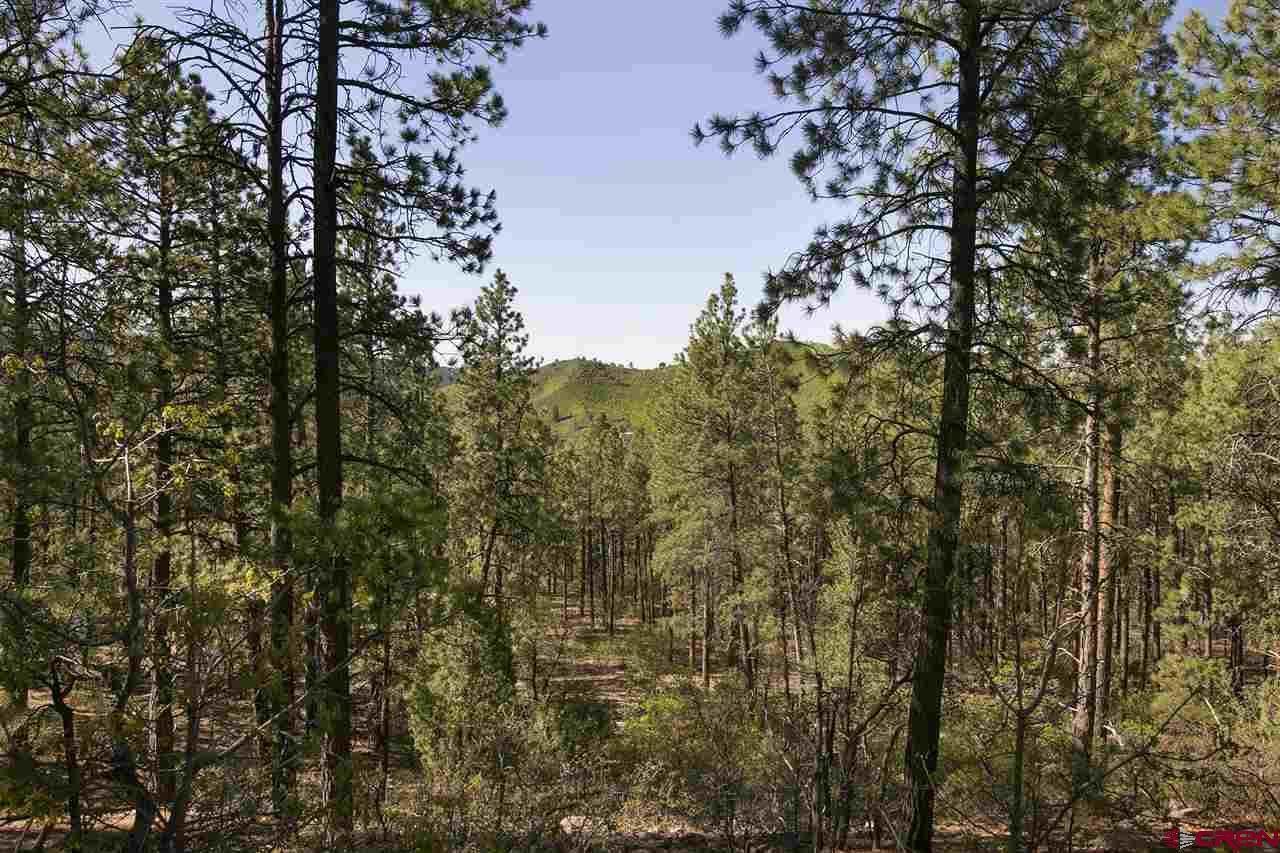 116 Cabin Creek Drive - Photo 1