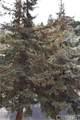 2208 Zermatt Drive - Photo 32