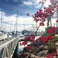 2242 Martinique Lane - Photo 19