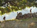 6770 Wheeler Canyon Road - Photo 67