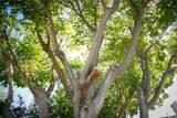 27837 Pine Crest Place - Photo 48
