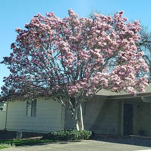 501 Oak Vista Place - Photo 1