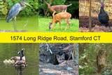 1574 Long Ridge Road - Photo 32