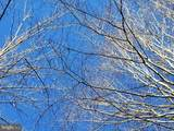 5701 Partlow Rd - Photo 40