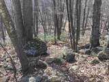 2465 Spruce Creek Ln - Photo 29