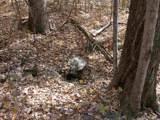 Lot H Old Stoney Creek Rd - Photo 11