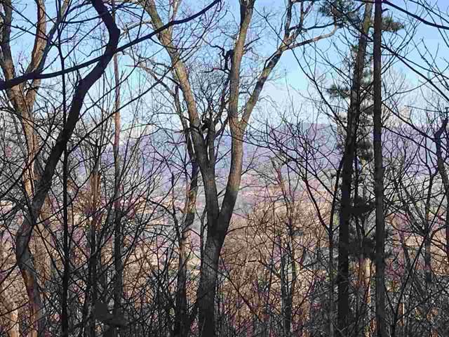 TBD High Pines Dr F20, Luray, VA 22835 (MLS #597712) :: Jamie White Real Estate