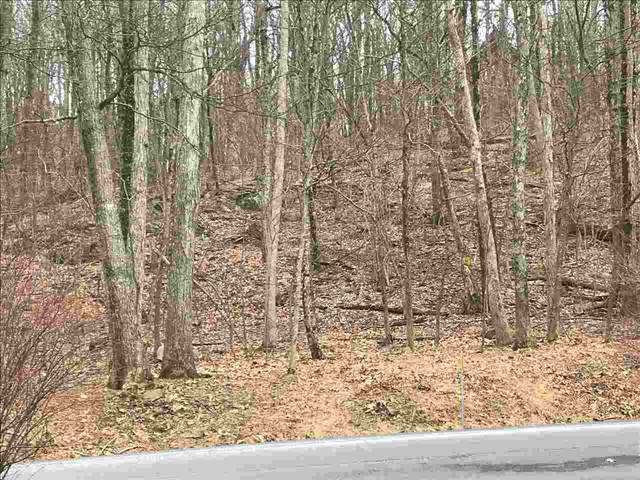 43 Deer Springs Ln, Wintergreen Resort, VA 22967 (MLS #601519) :: Real Estate III